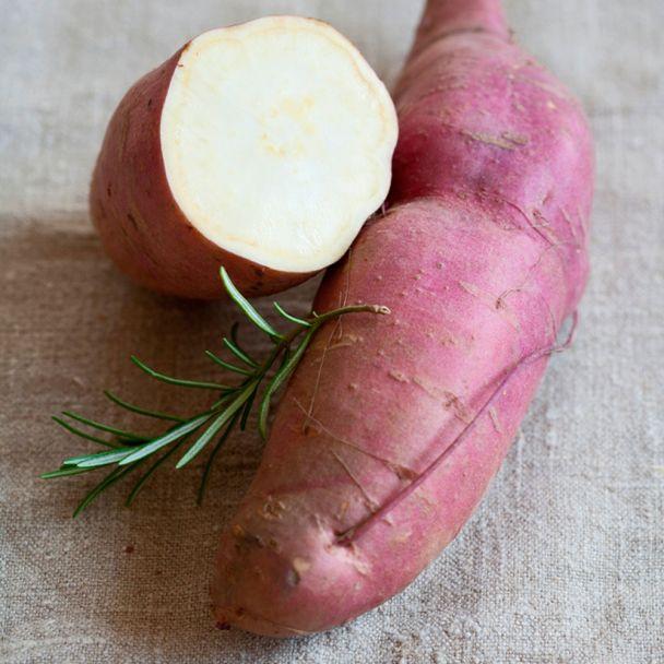 Süßkartoffel 'Erato White'