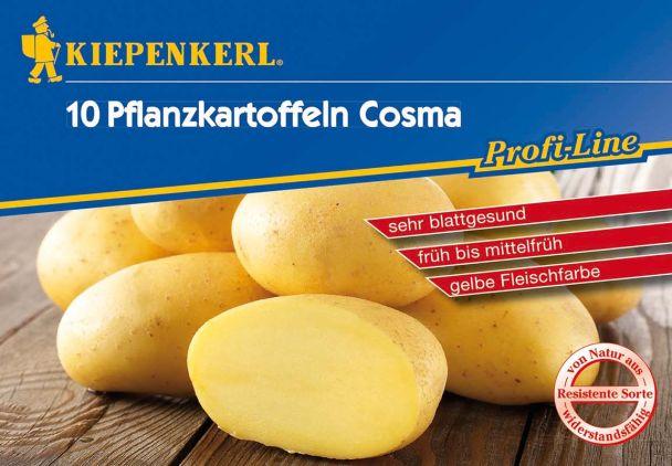 Pflanzkartoffeln Cosma, 10 Knollen