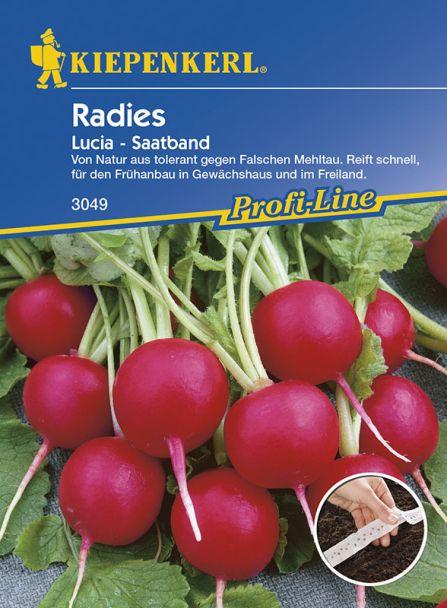 Radies 'Lucia' (Saatband)