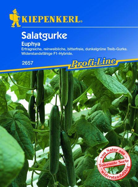 Salatgurke 'Euphya' F1