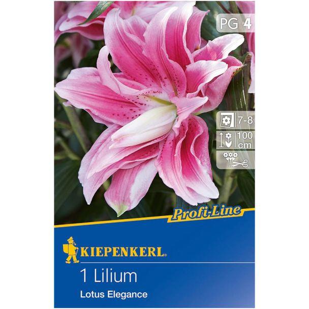 Lilium Lotus Elegance