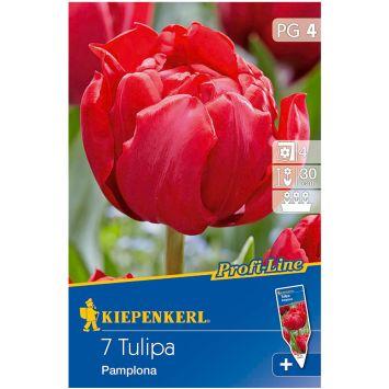 Profi-Line Tulpen Pamplona
