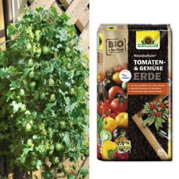 Sparangebot: 2 x 'Mexicana' - Mini-Nasch-Gurke + 1 x NeudoHum® Tomaten- und Gemüseerde, 20 Liter