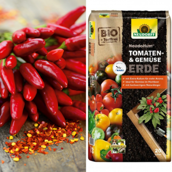 Hot Chili Red + Erde (Sparangebot)