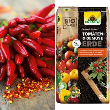 Hot Chili Red + Erde (Sparangebot)