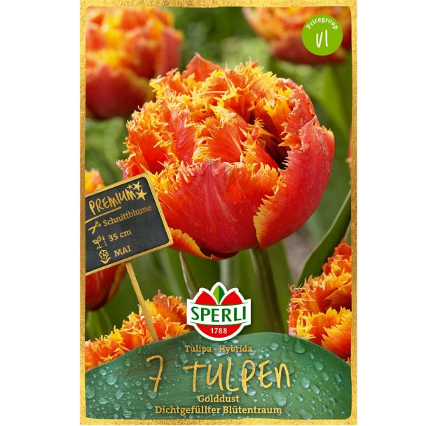 Sperli Premium Tulipa Gold Dust