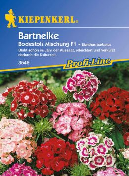 Bartnelken 'Bodestolz Mischung' F1