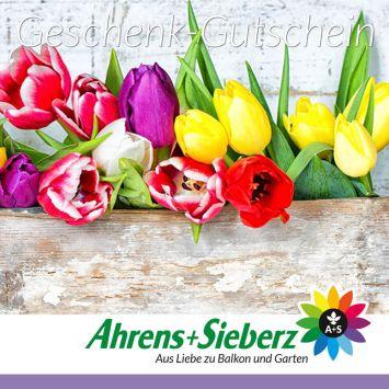 Geschenkgutschein Tulpen