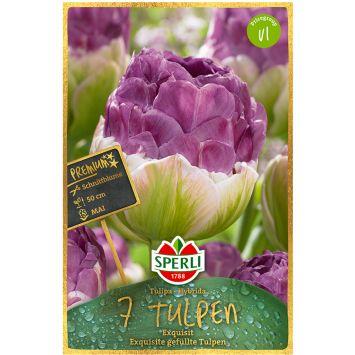 Sperli Premium Tulpen Exquisit