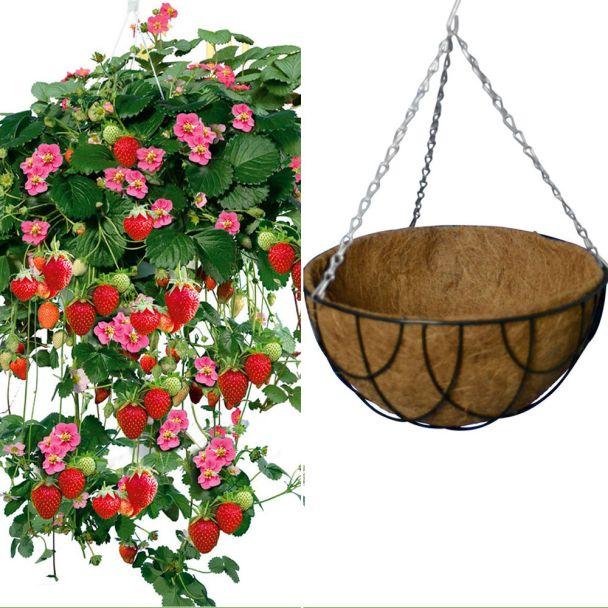 3 x Hänge-Erdbeeren 'Rosalie' + 1 x Natur-Hängeampel