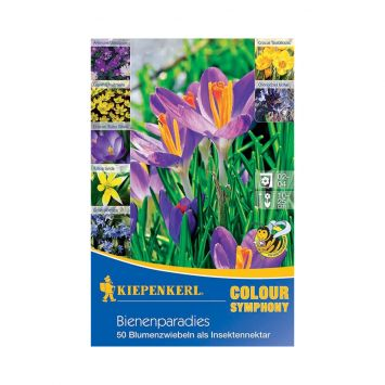 Farbsymphonien 'Bienenparadies'