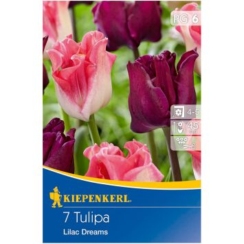 Tulipa-Mix Liliac Dreams