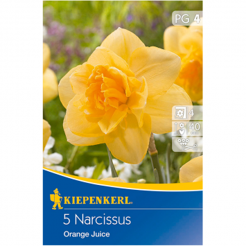 Narcissus Orange Juice