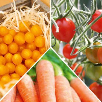 Set-Preis: 2x Rote Murmel + 2x Gelbe Murmel + 2x Süße Möhre
