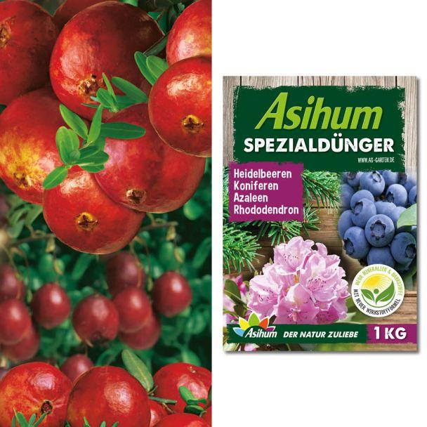 Sparpreis: 6 x Fruchtender Bodendecker Cranberry + 1 kg Dünger