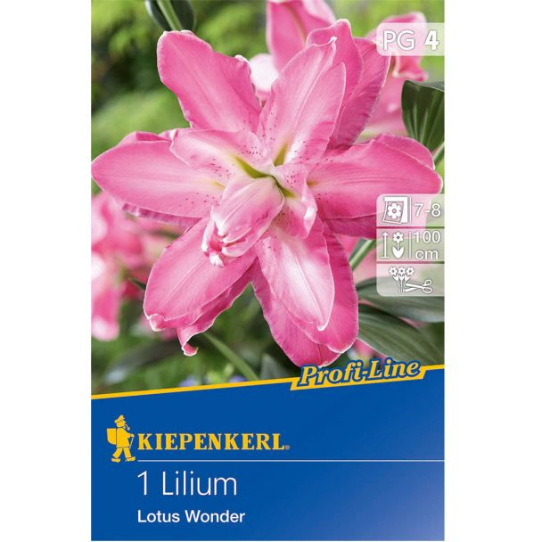 Lilium Lotus Wonder