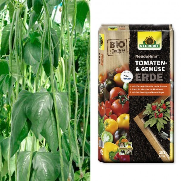 Sparangebot: 2 x 'Meterbohnen' - fadenlose Stangenbohne + 1 x NeudoHum® Tomaten- und Gemüseerde, 20