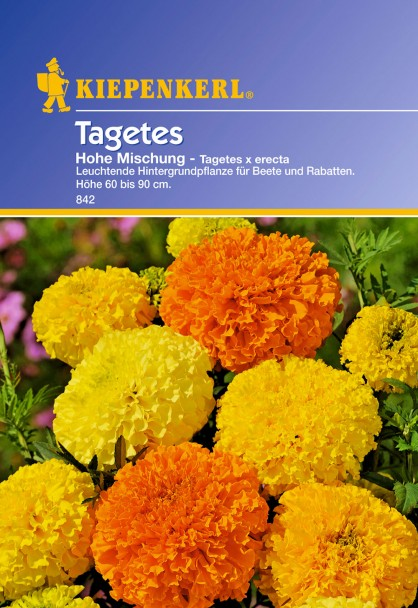 Tagetes 'Hohe Mischung'