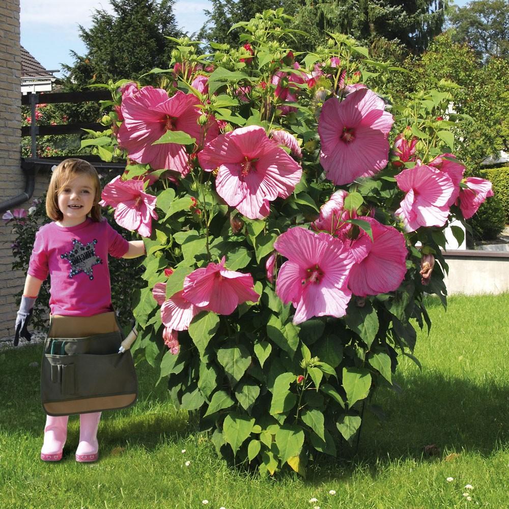 Riesen Hibiskus Kaufen : riesen stauden hibiskus 39 kopper king 39 stauden hoch bl hstauden stauden ahrens sieberz ~ Watch28wear.com Haus und Dekorationen
