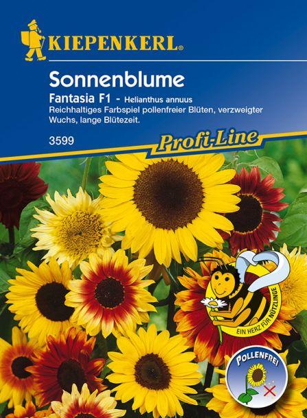 Sonnenblume 'Fantasia' F1