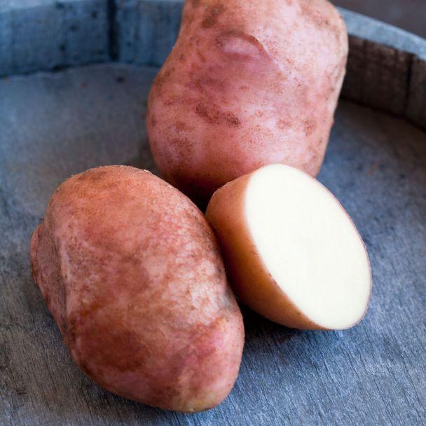 Topf-Kartoffel 'Axona'
