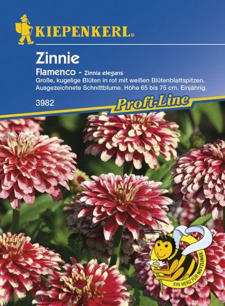 Zinnie 'Flamenco'