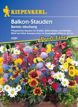 Balkon-Stauden 'Baristo Mischung'