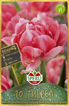 Gefüllte, frühe Tulpen 'Foxtrot'