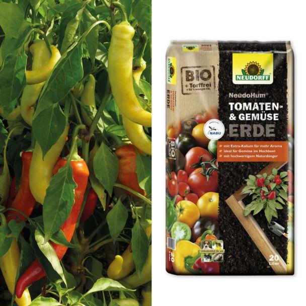 Setpreis: Sweet & Long – Milder Spitz-Paprika + 1 x NeudoHum® Tomaten- und Gemüseerde