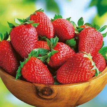 Erdbeere 'Sonata'