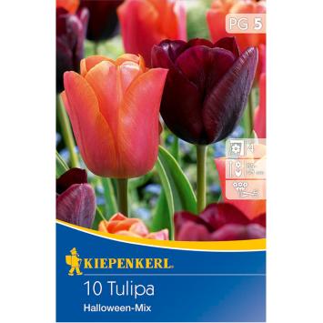 Tulpenmischung Halloween-Tulpen