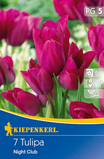 Mehrblütige Tulpen `Night Club` - Blumenzwiebel