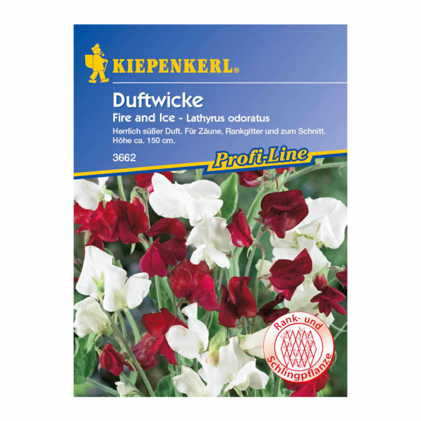 Duftwicke 'Fire and Ice'