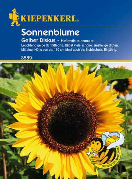 Sonnenblume 'Gelber Diskus'
