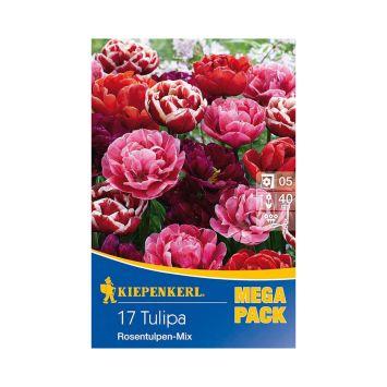 Tulpen `Rosentulpen Mix`
